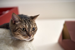 A9__DSC0041_C1 (Bazoka+Cynthia) Tags: cat delta 小婆 新北市 樹林區 貓