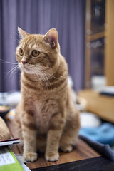 A9__DSC0038_C1 (Bazoka+Cynthia) Tags: alpha cat 小婆 新北市 樹林區 貓