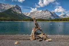 Kayaking Kanaskis Lake (Phil's Pixels) Tags: kayaks kayakers paddlers driftwood canadianrockies upperkananaskislake kananaskiscountry alberta canada