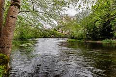21-La Dronne, rivière noire (Alain COSTE) Tags: 2019 bourdeilles dordogne dronne nikon ocb périgordvert rivière sigma20mmf14 printemps village france