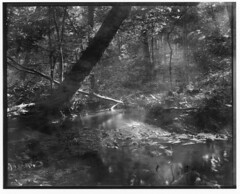 a little stream by my home (philipgreene) Tags: papernegative speedgraphic 135mmschneiderkreuznachf47 philipgreene guilfordct expiredphotopaper 4x5