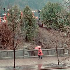 Pretty in Pink (joanne clifford) Tags: style fashion fujifilmxt3 xf1655 ontario umbrella tavernonthehill ottawa spring rain pink