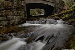 276Bridge+1_1075_fusw (nickp_63) Tags: brevard nc north carolina whitewater cascade rapids bridge log tree long exposure nature river 276