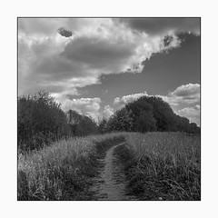 Path and clouds (K.Pihl) Tags: path landscape ilfordhp5 nature planar75mmrolleiflex blackwhite schwarzweiss film clouds rolleiflex35e orangefilter monochrome standdevelopment pellicolaanalogica bw analog rodinal1100