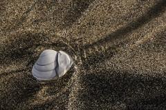 Ripple (SkyeWeasel) Tags: macromondays fourelements macro water sand seashell shell texture sandpattern ngc npc