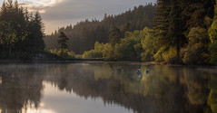 Two Geese On A Loch (jasty78) Tags: lochanaghleannain canadiangeese geese birds wildlife loch lochan lake water reflections still mist morning mood gold goldenhour light sun sunrise outside sky nature green trees tree landscape spring stirling trossachs highlands scotland nikond810 tamron150600mm 150mm panorama