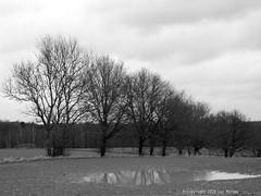 Wet January (Spotmatix) Tags: belgium brabantwallon builtin camera cloudy countryside effects lx5 landscape lens lumix monochrome places seasons villerslaville