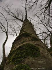 Wet January (Spotmatix) Tags: belgium brabantwallon builtin camera cloudy countryside lx5 landscape lens lumix places seasons villerslaville