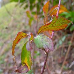 Winter Colors (Spotmatix) Tags: belgium brabantwallon builtin camera cloudy countryside lx5 landscape lens lumix places seasons villerslaville winter