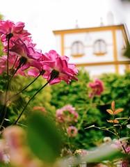 (╰☆Kristen) Tags: seville sevilla spain españa andalucia nikon ¨nikonphotography¨ ¨nikond3300¨ dof ¨depthoffield¨ macro flower closeup
