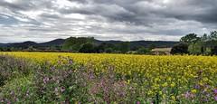 Near Torrent (Meino NL) Tags: torrent koolzaad rapeseed costabrava spain catalunya voorjaar lente spring landschap landscape