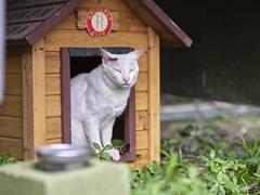 GFX50S__DSF4145_C1 (Bazoka+Cynthia) Tags: cat lori 小婆 新北市 猴硐 瑞芳區 貓 阿偉