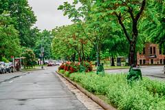 2019.05.04 Vermont Avenue Garden Blooms and Work Party, Washington, DC USA 01990