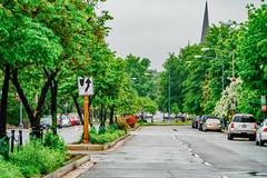 2019.05.04 Vermont Avenue Garden Blooms and Work Party, Washington, DC USA 01955