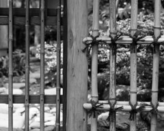 Peeping into another world (lebre.jaime) Tags: japan tokyo setagaya sangenjaya 日本 東京都 世田谷区 三軒茶屋 gate bamboo hasselblad 503cx planar cf2880 analogic film120 mf mediumformat blackwhite bw noiretblanc pretobranco pb kodak technicalpan iso25 epson v600 affinity affinityphoto