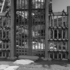 A gate to another world (lebre.jaime) Tags: japan tokyo setagaya sangenjaya 日本 東京都 世田谷区 三軒茶屋 gate bamboo hasselblad 503cx planar cf2880 analogic film120 mf mediumformat blackwhite bw noiretblanc pretobranco pb kodak technicalpan iso25 epson v600 affinity affinityphoto squareformat