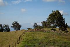 Maui on the Horizon, Kohala, Hawaii (Big Island) (Roger Gerbig) Tags: kohala hawaii bigisland island rogergerbig canoneos5dmarkii canonef24105mmf4lisusm 3239 haleakalā maui