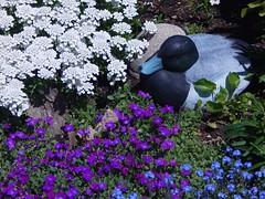 Flower Garden (starmist1) Tags: garden decoy may warm sunny spring duckdecoy flowergarden rockgarden frontyard maggiesgarden