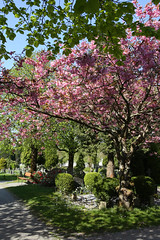 The Restingplace (thor_thomsen) Tags: restingplace graveyard stavanger norway color blossom green pink tree foliage grass bench sky walkway beautiful