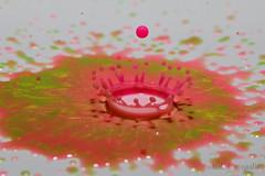 Macro Mondays - Four Elements (benno.dierauer) Tags: macrounlimited macro macromondays fourelements tabletop drops tropfen pink canoneosr tamronsp90mmf28dimacro11vcusd macrodreams