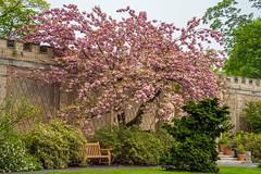 Happy Bench Monday! (JMS2) Tags: park cherryblossom benchmonday bench scenic spring