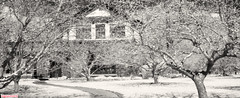 City Orchard in spring (DelioTO) Tags: 6x12 architecture blackwhite canada city d23 efkeir820 f317 home landscape ontario pinhole r72 spring ir