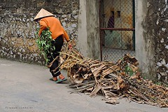 old woman in a vietnamese village (gabi lombardo) Tags: donna woman working vietnam cappello hut hat chapeau orange asia shoes gitter fence cancello door street vicolo gasse mauer muro wall