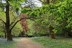 Spring into Summer (fotosforfun2) Tags: surrey winkworth arboretum tree landscape beauty spring summer seasons green colour foliage