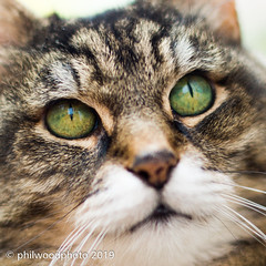 365-2019-126 - Green Eyes (phil wood photo) Tags: 365 365colorfun 365colourfun cat color365 colour365 cuda day126 eyes green jerry may