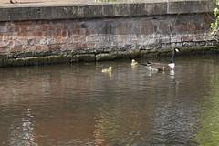 06 May 2019 Nottingham (15) (AJ Yakstrangler) Tags: nottingham yakstrangler canal