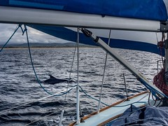 Return from Rathlin. (apcmitch) Tags: sealmorning rathlin coast