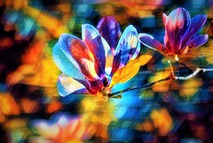 True Colors (theresedesantis@bellsouth.net) Tags: tree flower plant botanical abstract colors rainbow theresedesantis