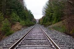 _MG_9979 (Henrybailliebro) Tags: nature barrie ontario canada spring summer nice cool green natural train tracks converging