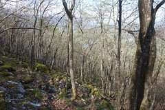 Forest @ Hike to Le Vuache (*_*) Tags: randonnee nature montagne mountain hiking walk marche 2019 printemps spring april jura vuache savoie europe france hautesavoie 74 forest chevrier afternoon