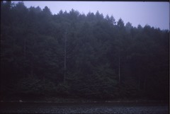 (✞bens▲n) Tags: leica m4 kodak e100g summilux 50mm f14 film analogue slide reversal trees water lake nature japan nagano