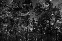 WW XII ([ Time - Beacon ]) Tags: tb water reflections ripples blackandwhite blackwhite bnw bw monochrome monochromatic abstract