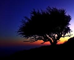 Ильяс-Кая (SoundFun) Tags: ильяская юбк крым одинокоедерево закат море горы crimea sunset