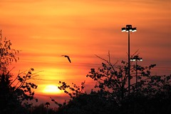 Industrial Sunset (Epiphany Appleseed) Tags: sunset industrial surrey april 2019