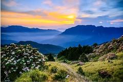 合歡山杜鵑花季與晨光(Mt.Hehuan Alpine Rhododendron season with sunrise)。 (Charlie 李) Tags: hdr eastpeak alpinerhododendron mthehuan sunrise 百岳 日出 東峰 高山杜鵑花 杜鵑花 合歡山