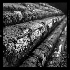 Scrached (vincent-photo) Tags: analog blackwhite bw caffenol caffenolch film hp5 ilford mediumformat square tlr twinlensreflex vintage 6x6 120 yashica yashica12 yashicaffenol