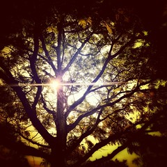 Sun under canopy (LAKAN346) Tags: outdoors light pov contrast saturated sunset tree nature spring 2019 canopy happy beautiful myview enchanted vision fairytale mystical