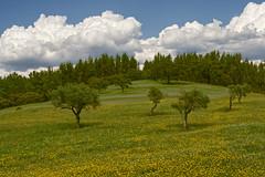 On the Templars route (road N346) (lebre.jaime) Tags: portugal beira templarsroute tree sky cloud nikon d600 voigtländer 58f14sliis nokton affinity affinityphoto digital ff fx fullframe