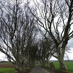 kingsroad3 (Shannon O'Haire) Tags: got gameofthrones ireland northofireland northernireland kingslanding kingsroad bregaghroad trees darkhedges nature tvshows gothsintrees