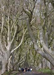 Kingsroad (Shannon O'Haire) Tags: got gameofthrones ireland northofireland northernireland kingslanding kingsroad bregaghroad trees darkhedges nature tvshows gothsintrees