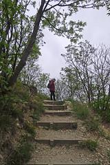 Gloomy ascent (aniko e) Tags: hungary balatonfüred tamáshegy hiking outdoors spring balaton balatonfelvidékinemzetipark balatonuplandsnationalpark