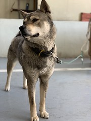 (CARLITO_) Tags: 전주 개