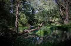 Parco Lavino (Maria Teresa D) Tags: lago lavino parco riservanaturale natura verde alberi abruzzo italy