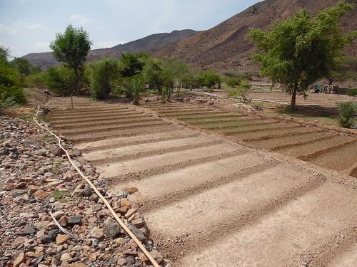 Well-based Small scale gravity irrigation, Djibouti (1)