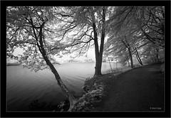Sony A7R IR 720nm with 850nm filter, Sony 16-35mm Vario-Tessar T FE F4 ZA OSS (Dierk Topp) Tags: 850nm a7r bw bäume ilce7r ir sony1635mmvariotessartfef4zaoss sonya7rir infrared monochrom reinfeld sw sony trees wald wood herrenteich