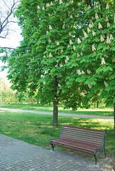 Парк Шевченка, Одеса, травень 2019 InterNetri Ukraine 309